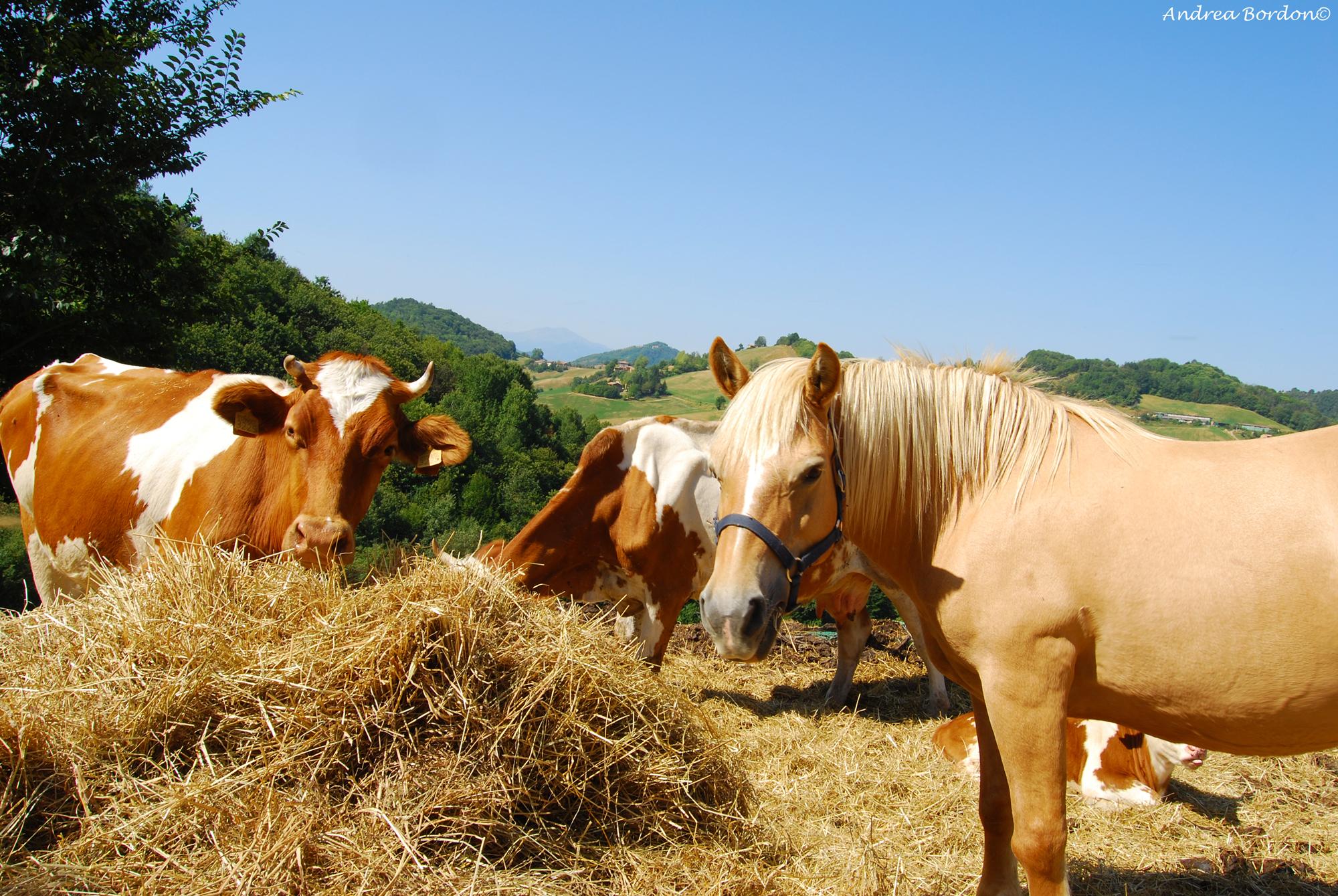 Fattoria c nova for Piani di fattoria con foto
