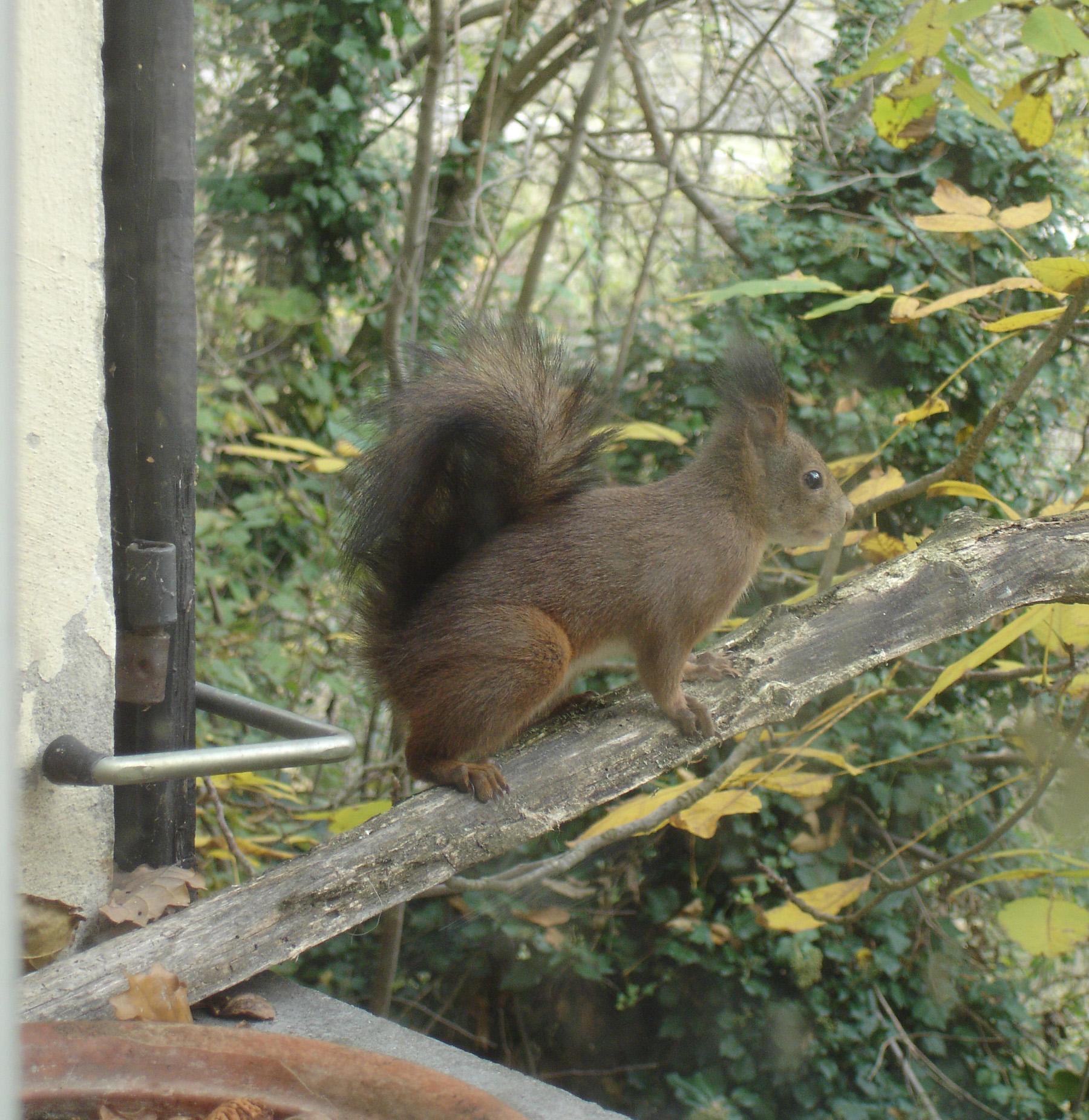 scoiattolo finestra