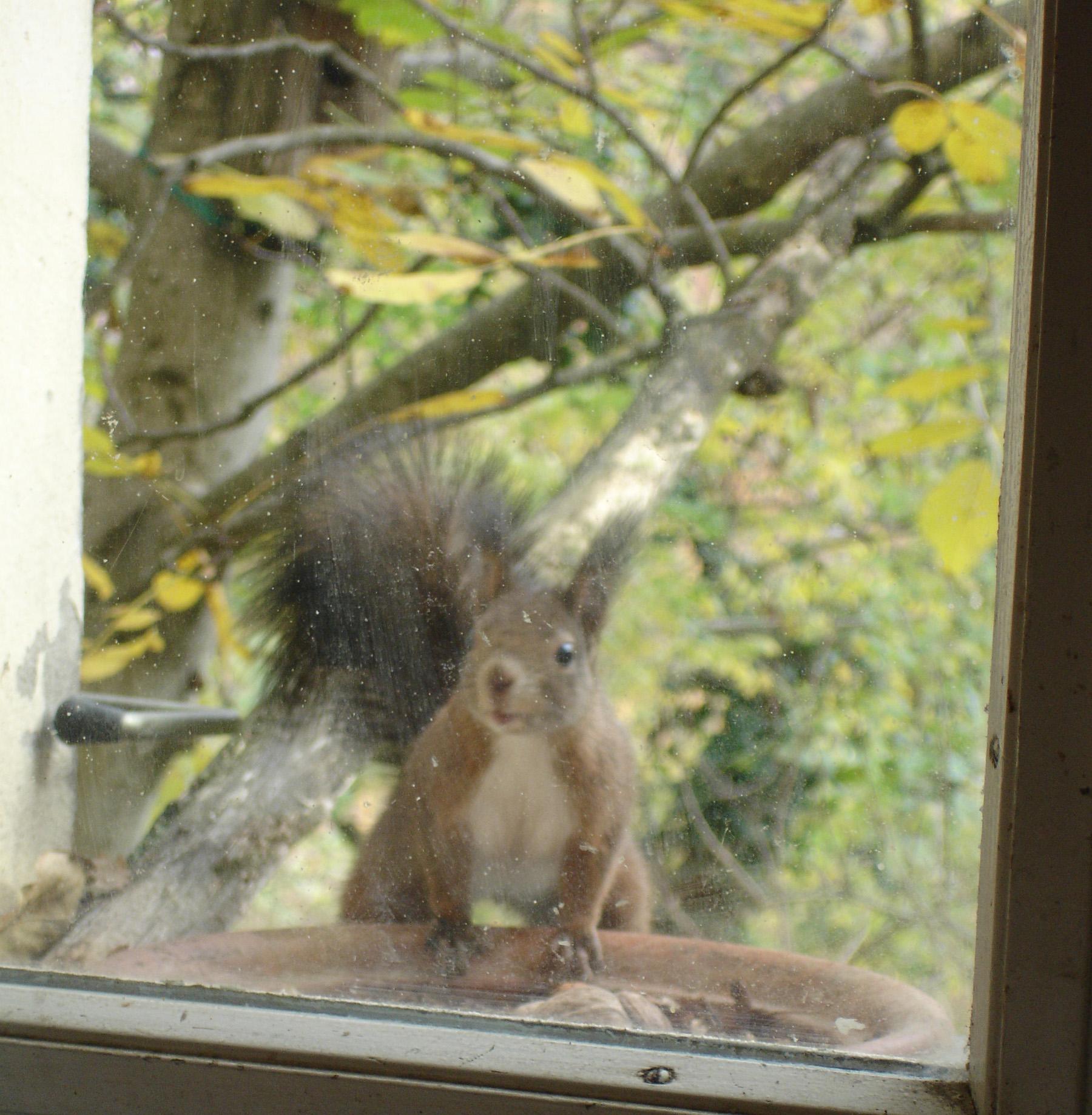 scoiattolo finestra2